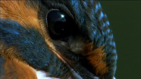 Nature -- S32 Ep7: Kingfisher, the fisherman of the Shannon