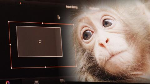 Nature -- Behind-The-Scenes of Snow Monkeys, Part 2: Post-Production