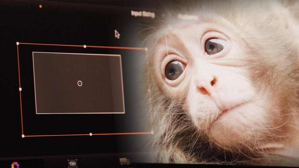 Behind-The-Scenes of Snow Monkeys, Part 2: Post-Production image