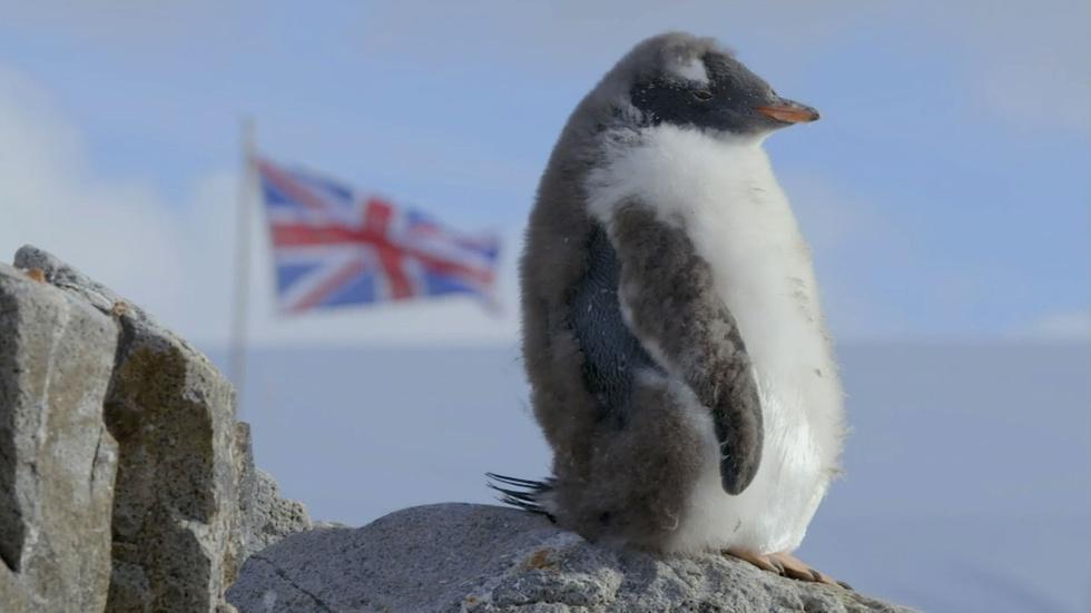 Punk Rock Penguins Take a Stand image
