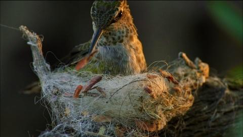 Nature -- Animal Homes: The Nest