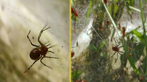 Nature -- S33 Ep10: Social Spiders Build Massive Nests