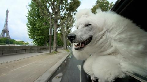 S34 E6: PETS Wild at Heart   Episode 2   Preview