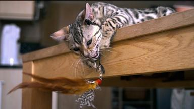 PETS Wild at Heart | Episode 1 | Preview