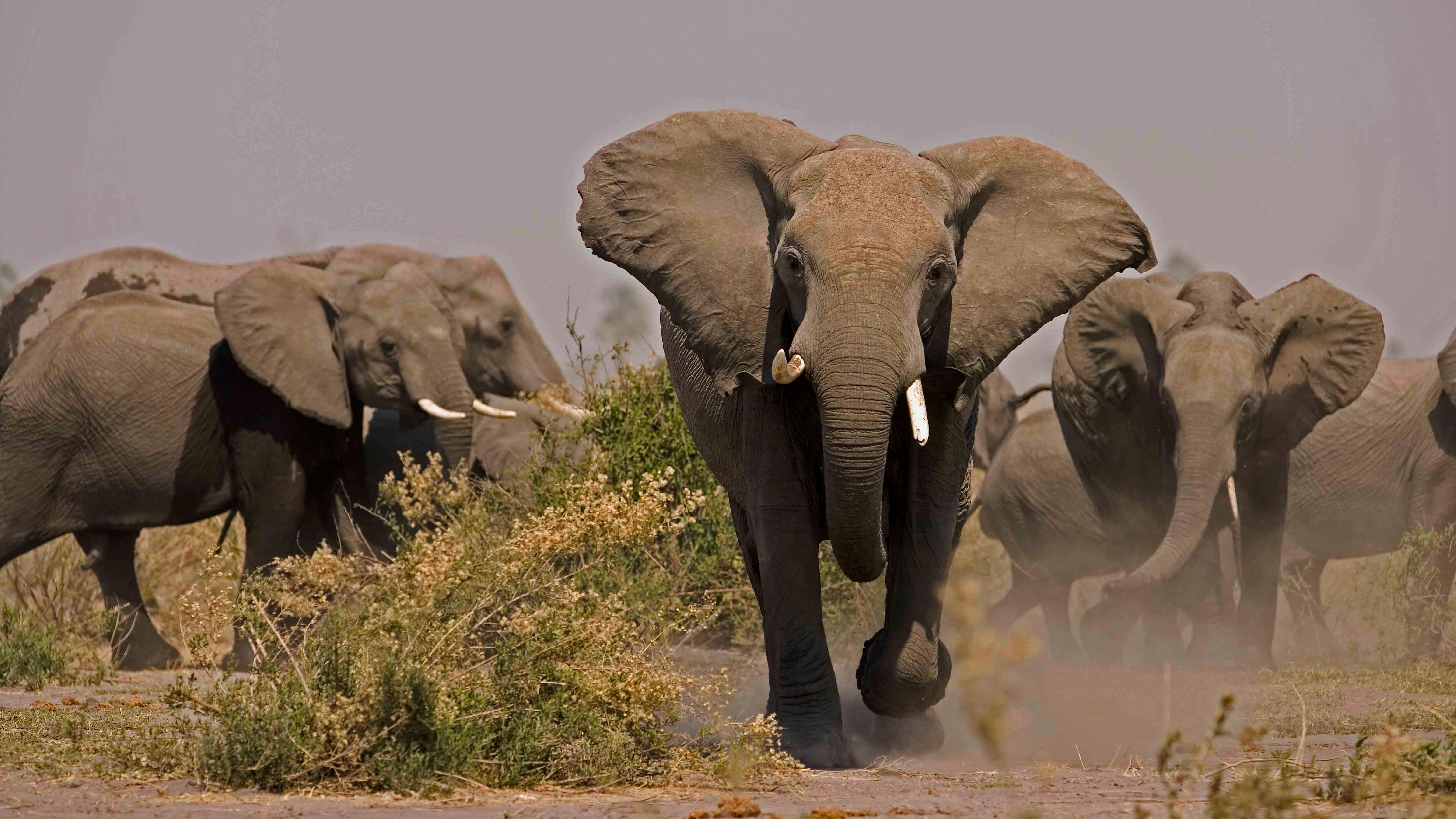 Soul of the Elephant | Nature | PBS  Soul of the Ele...