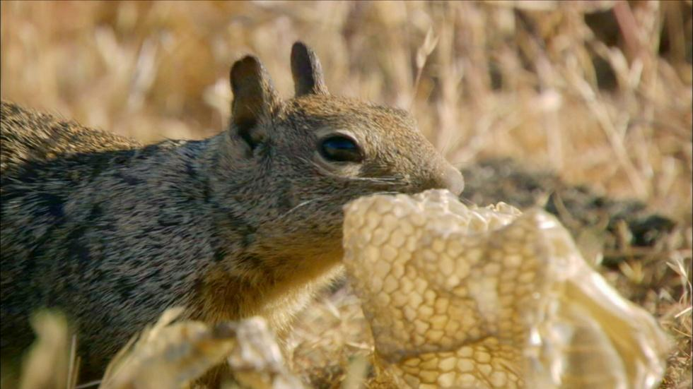S34 Ep11: Squirrels Mask Scent with Rattlesnake Skin image