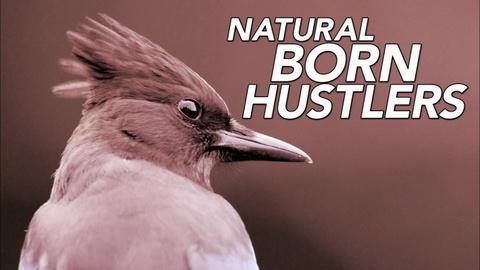 S34 E7: Natural Born Hustlers   Episode 1    Preview