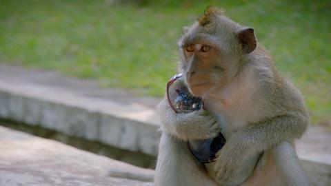 Nature -- S34 Ep10: Monkeys Ransom Tourists' Belongings