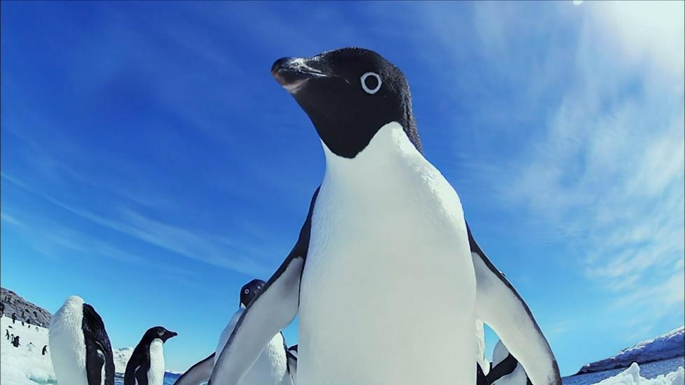 Penguin Invasion! image