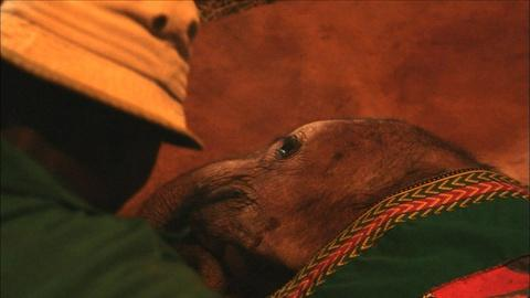 Nature -- S34 Ep1: Bedtime at the Elephant Orphanage