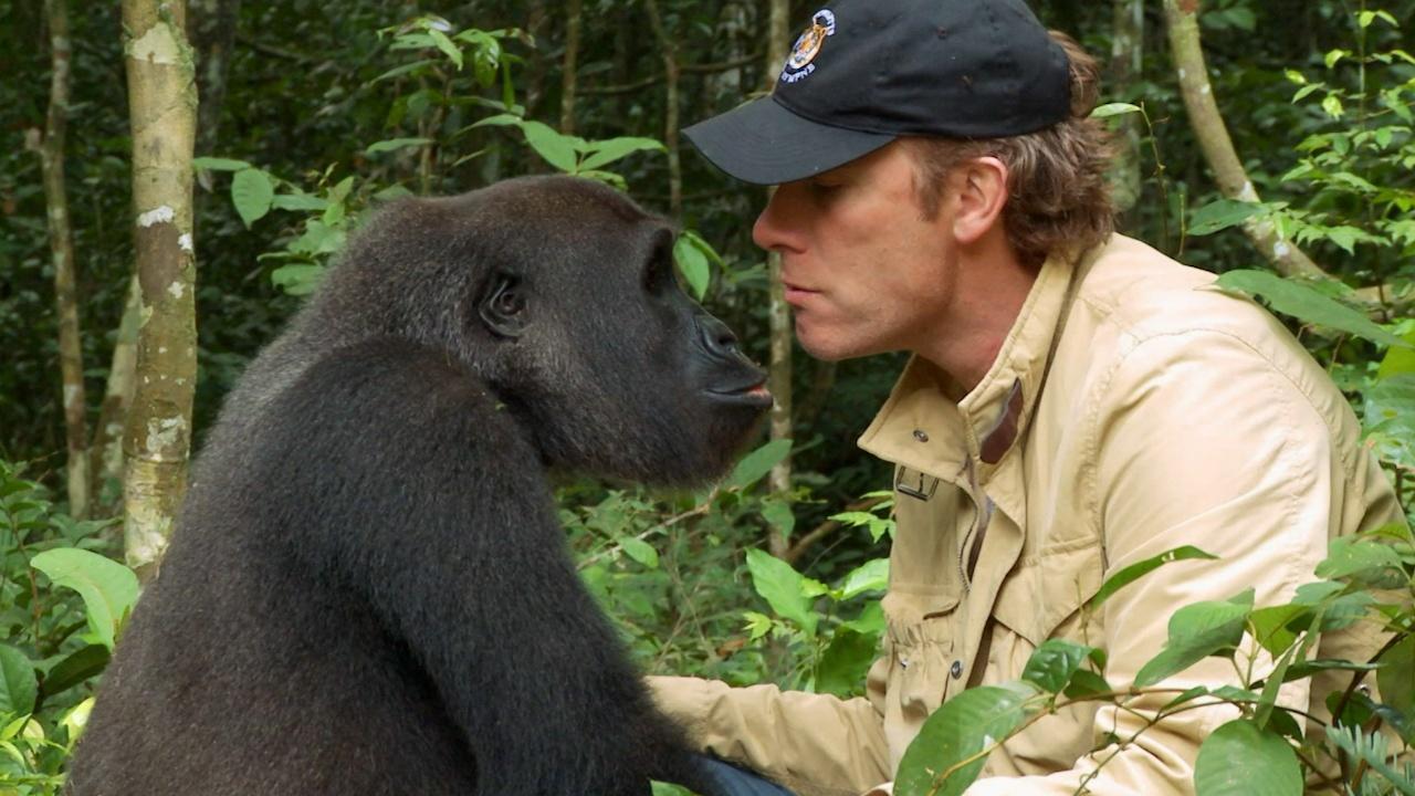 Nuôi 1 con khỉ đột rồi thả về tự nhiên, 5 năm sau người đàn ông bất chấp đi tìm lại và cái kết ngoài tưởng tượng - Ảnh 4.