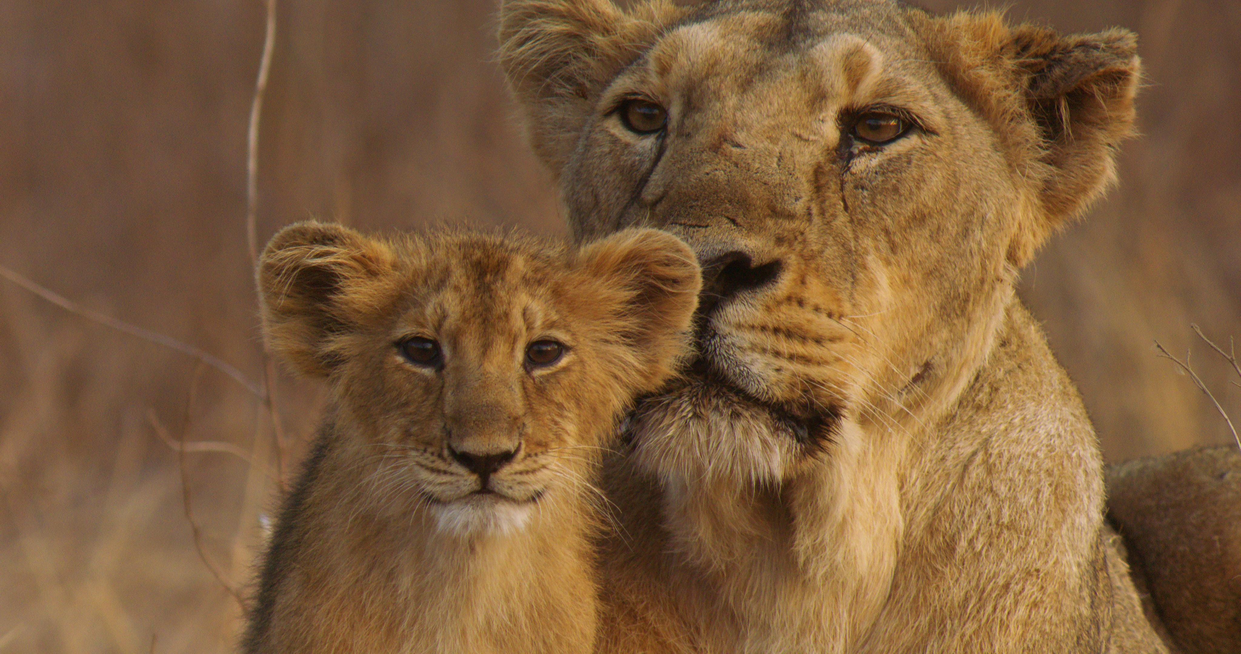The lions den milton wv