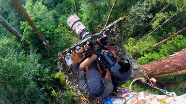 The Making of 'The Last Orangutan Eden'