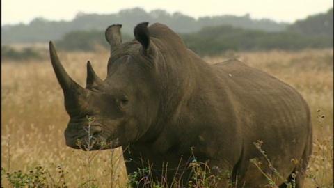 Nature -- Rhinoceros