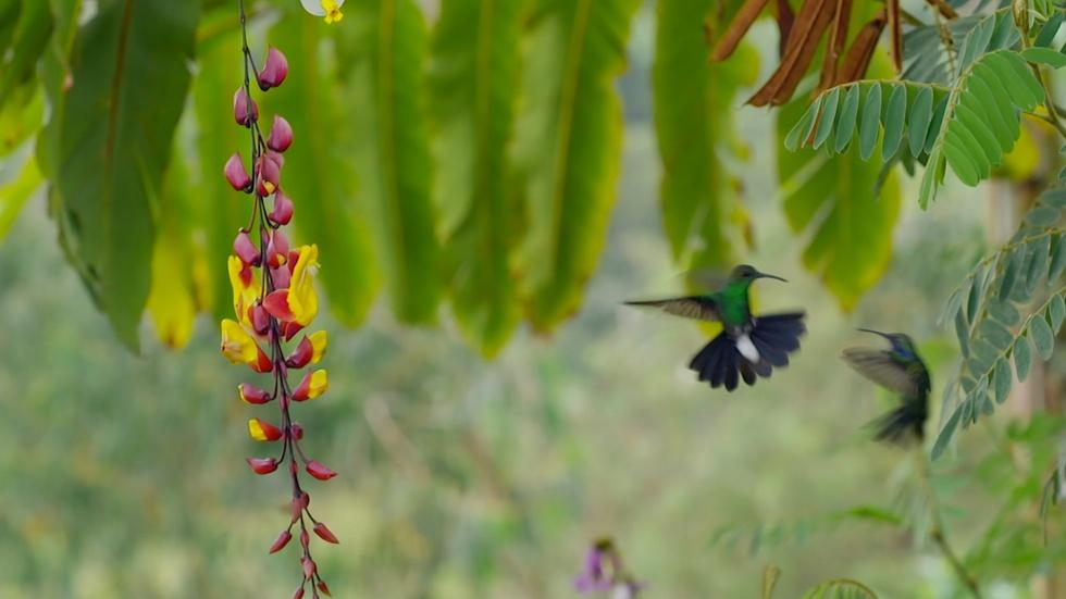 Hummingbirds Battle in the Air  image