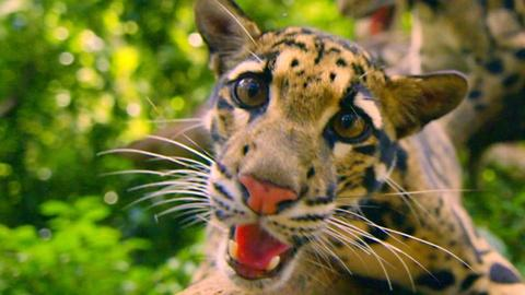 Nature -- S35 Ep5: Meet the 'Monkey Cat'