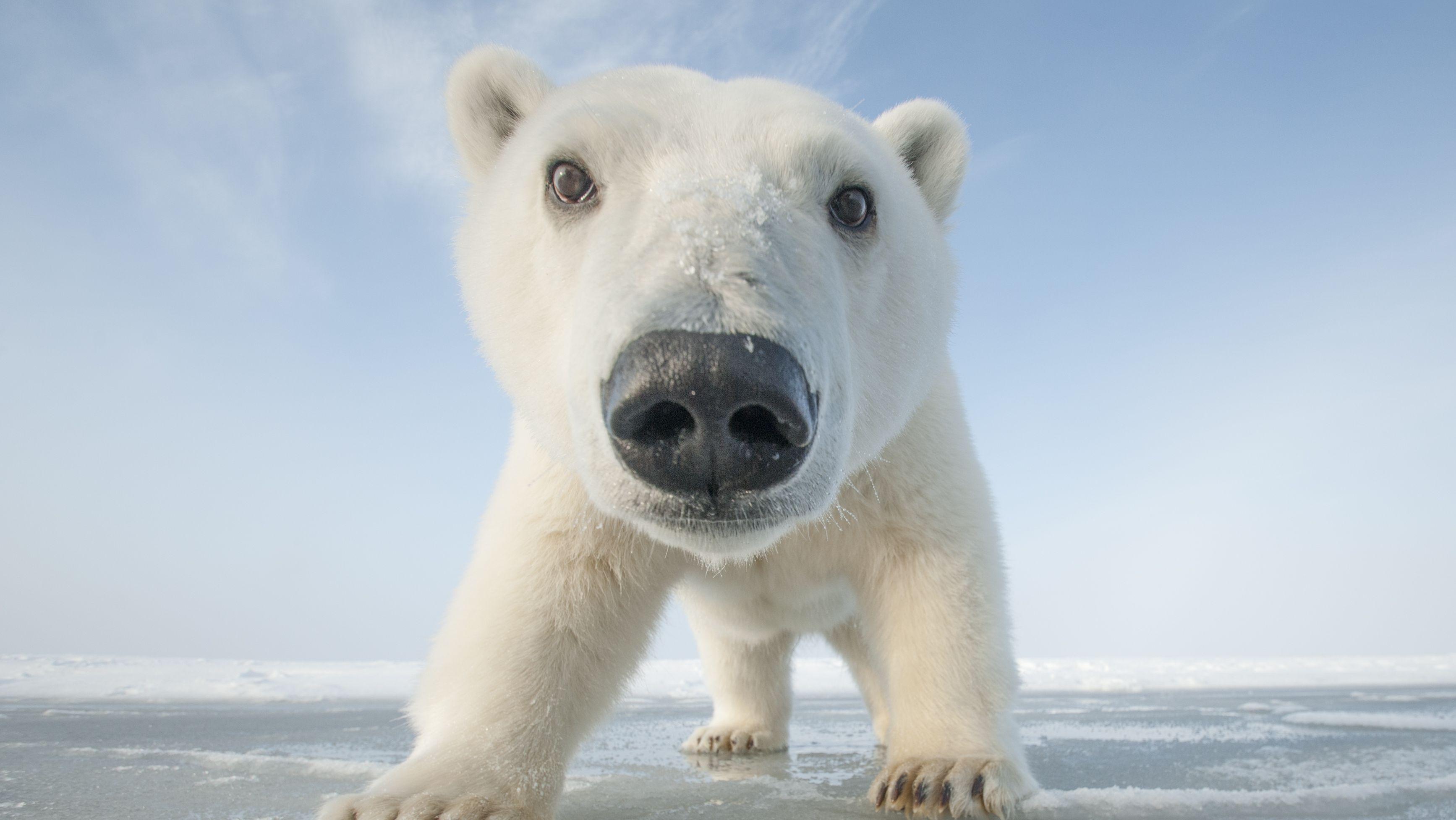 snowbound  animals of winter