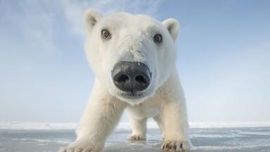Snowbound: Animals of Winter | Preview