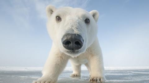 Snowbound: Animals of Winter