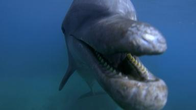 Dolphins Behaving Badly
