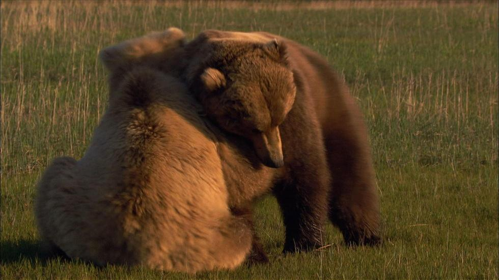 The Scent of a Bear image