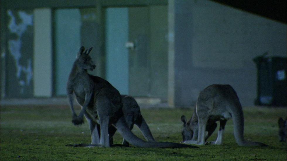 Metropolitan Marsupials image