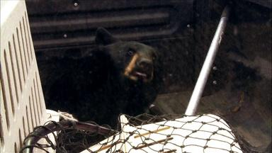 A Bear Goes Home