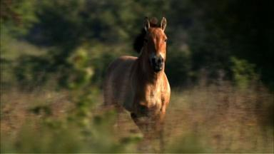 A Place for Wild Horses