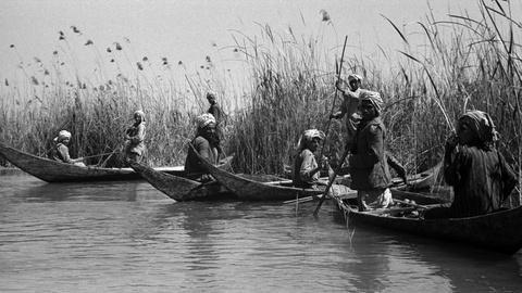 Nature -- Braving Iraq