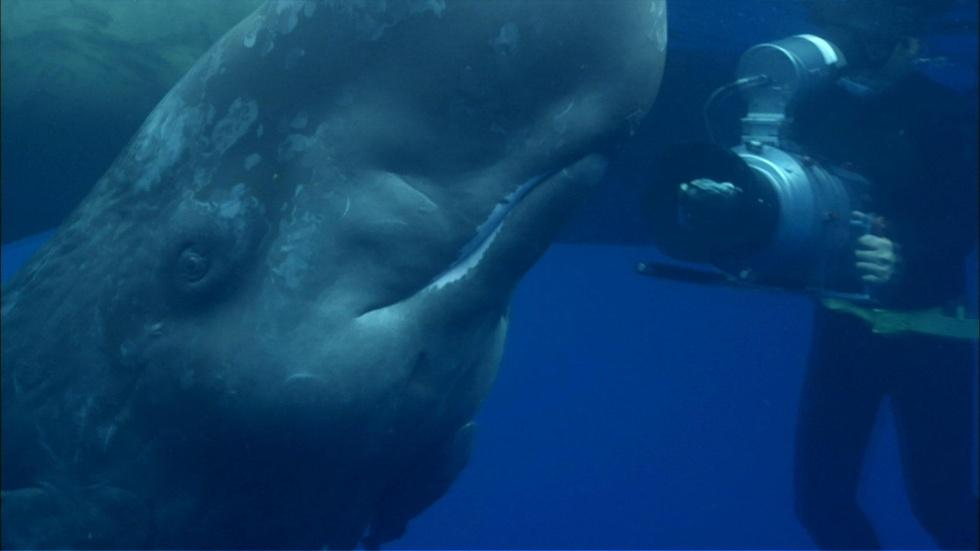 Visit from an Infant Sperm Whale image
