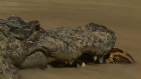 S28 E8: Alligator Versus Python