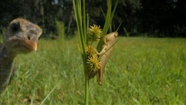 A Grasshopper Run