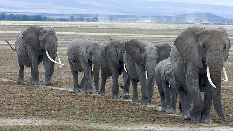 elephant essays kids Elephant poaching we are experiencing what is likely to be the greatest percentage loss of elephants in history, said richard g ruggiero, an official with the united states fish and wildlife service (ney york times december 3, 2012.