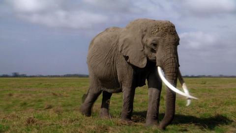 S29 E1: Echo: An Elephant to Remember