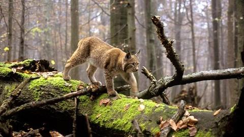 Nature -- S28 Ep7: Wild Balkans
