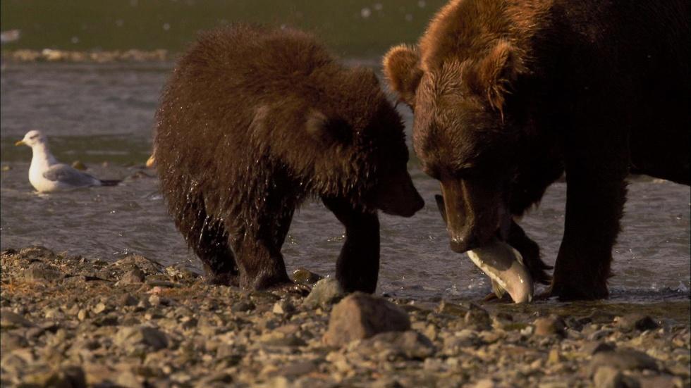 Education | Feasting on the Salmon Run image