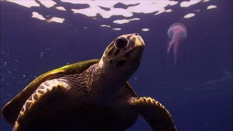 Nature -- Education | Which Came First - the Turtle or the Egg?