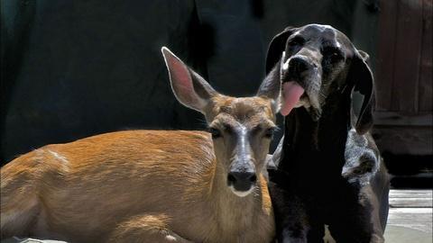 Nature -- Animal Odd Couples