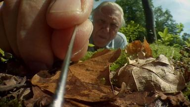 Attenborough's Life Stories: Part 1 Preview