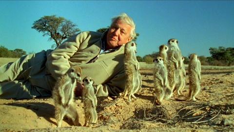 Nature -- Attenborough's Life Stories: Part 2 Preview