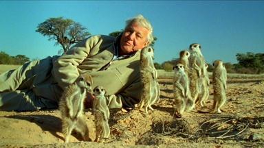 Attenborough's Life Stories: Part 2 Preview