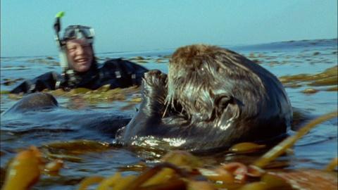 Nature -- Attenborough's Life Stories: Part 3 Preview