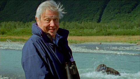 Nature -- S31 Ep5: Attenborough's Life Stories: Life on Camera Extende