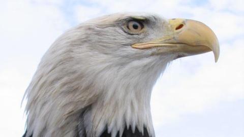 S27 E3: American Eagle - Preview