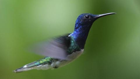 S28 E5: Hummingbirds: Magic in the Air - Preview