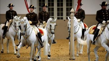 Legendary White Stallions Preview