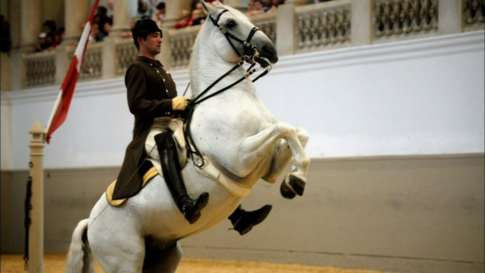 The World Famous Lipizzaner Stallions image