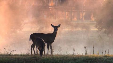 Nature -- S31 Ep12: Making The Private Life of Deer