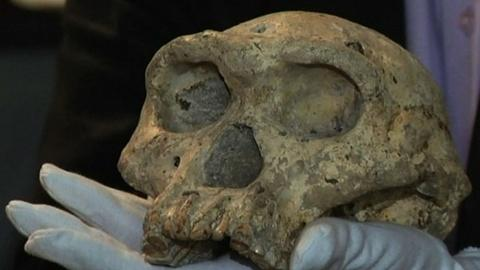 PBS NewsHour -- Unearthed skull revises understanding of human evolution