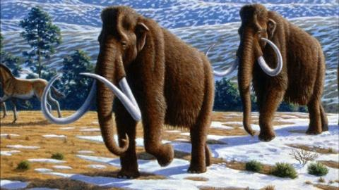 PBS NewsHour -- Should science revive the woolly mammoth?